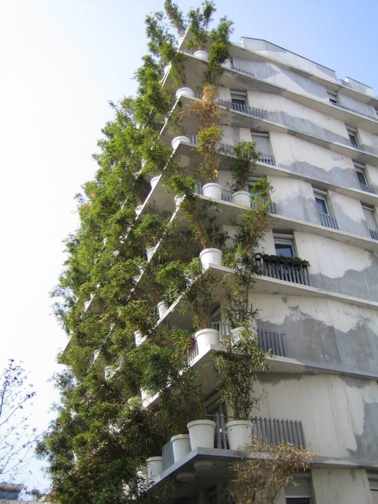 گیاهان مناسب نمای ساختمان