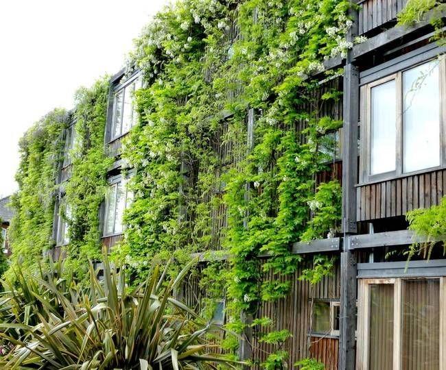 گیاهان در نمای ساختمان